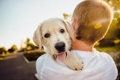 Ongekend Vakantiehuizen Duitsland - honden toegestaan | Hondenopvakantie.nl KT-96
